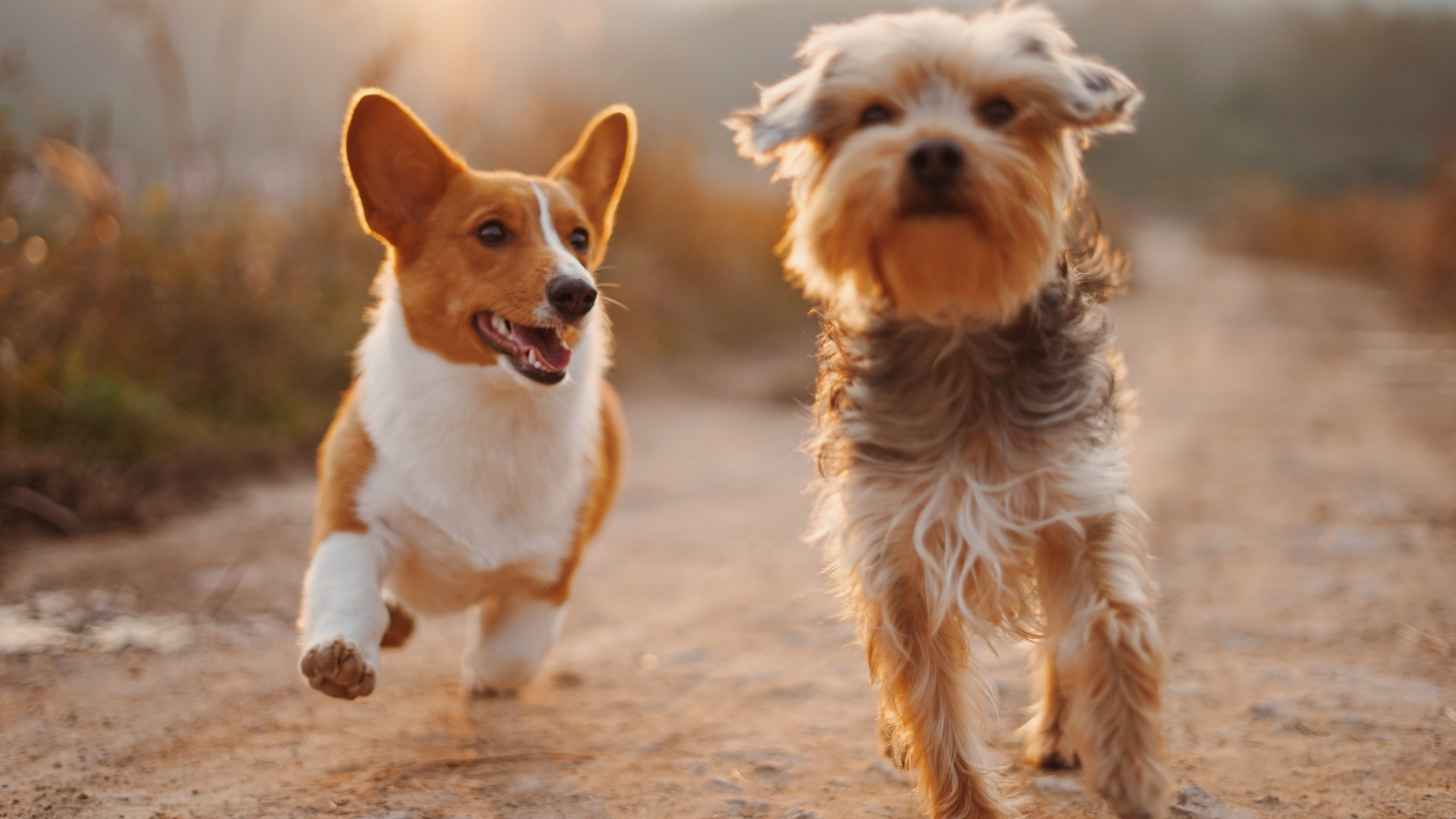 two dogs running down a dirt road to show we can learn from dogs