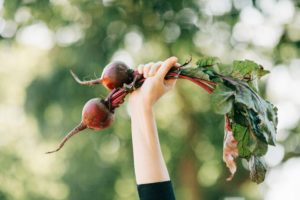Hand holding beetroot in the air