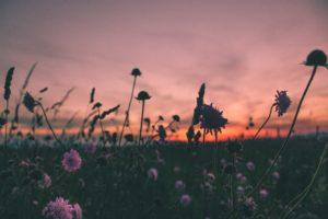 Flowers in a dark field