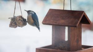Bird at a bird feeder