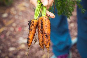 garden tips save money