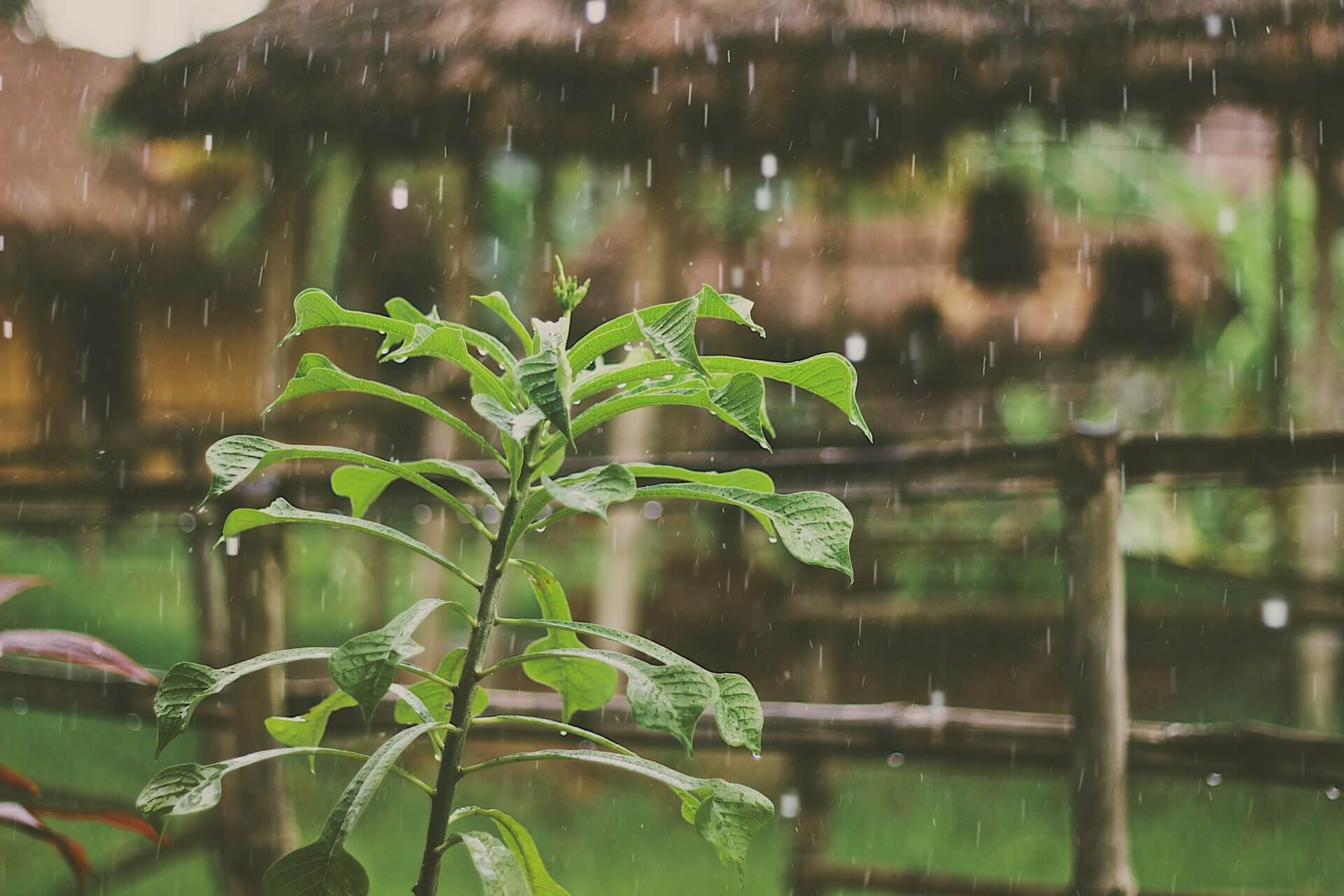 A plant being rained on in a home garden