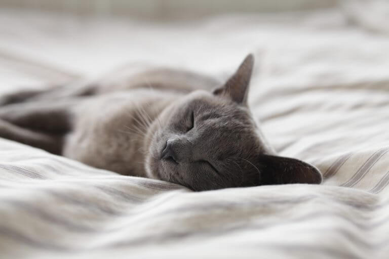 Cat sleeping on a cozy bed.